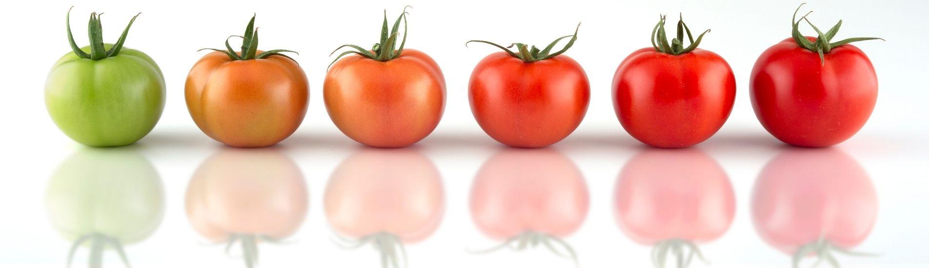 Una reflexión sobre «lo comestible» con el tomate como excusa